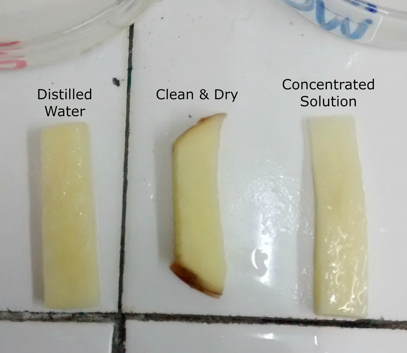 potatoe lab Get tremendous help with potato cells lab report we have highly qualified lab report writers who will help with your osmosis lab report accordingly no matter how urgent your inquiry is, you will receive the best guidance and support from our professionals.